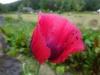Présence au Jardin
