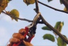 Journée taille et entretien des fruitiers